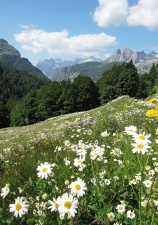 Alpine meadows of endless flowers.